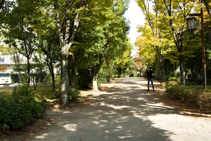季節の移り変わりを伝える『かつらぎの道』